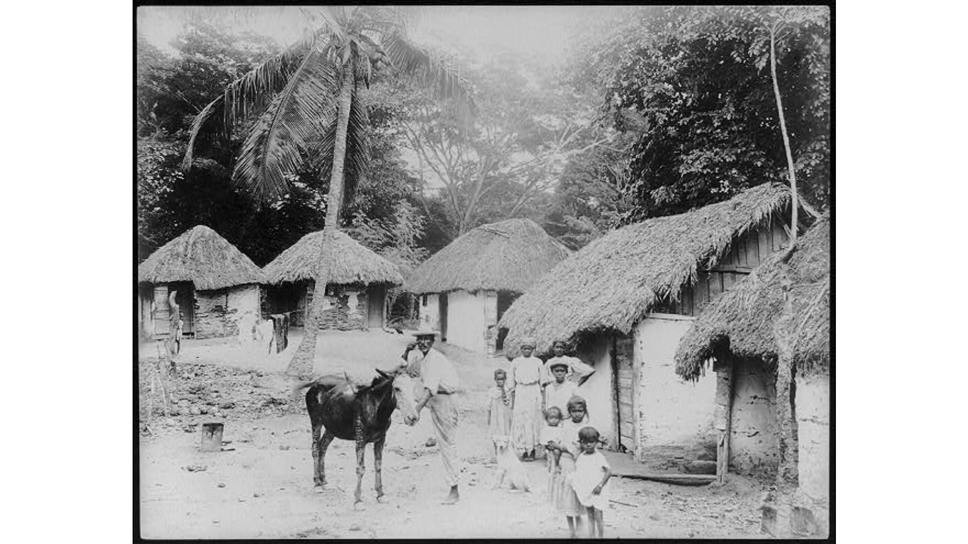 Donkey and owners - Kingston -1900 - Library of Congress Online Catalog